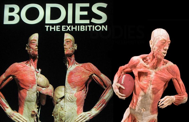 bodies the Exhibition las vegas