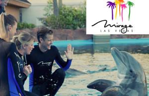 secret-garden-dolphin habitat